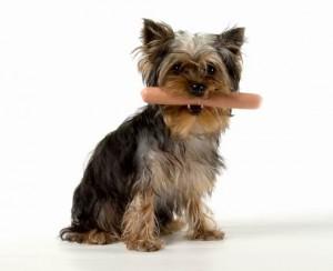 Неправильное питание собак и проблемы с жкт  запор, диарея, понос, рвота у собак
