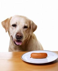 собака ворует со стола еду и вещи