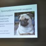 Ветеринарная клиника Белый клык Карелин Михаил Сергеевич