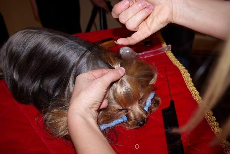 Как сделать хвостик собачке