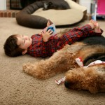 Эрдельтерьер, эрдель, Airedale Terrier