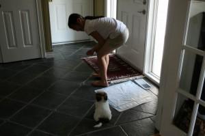 Как приучить щенка к туалету  и делать дела на улице