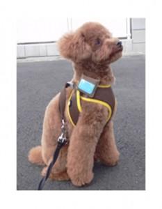 fujitsu электронный ошейник для собак Android