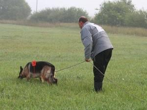 Следовая работа розыскная собака журнал Мир собак
