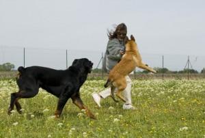 две собаки в доме вторая собака