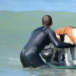 Собака-серфингист