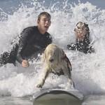 Собака катается на серфе