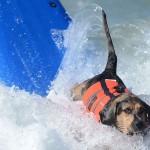 Собака катается на серфе журнал Мир собак