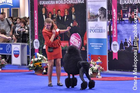 Выставка Россия 2012 2011
