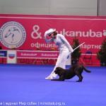 Выставка Россия 2012 фристайл танцы с собакой