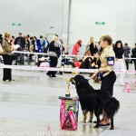 Выставка собак Россия 2012 бурят-монгольский волкодав