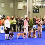 Выставка собак Россия 2012