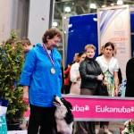 Выставка собак Россия 2012 фото бестов лучшая собака Чоговадзе Галина