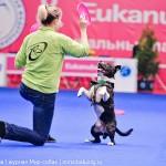Выставка собак Россия 2012 фризби