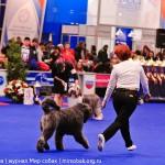 Выставка собак Россия 2012 фото бестов лучшая собака