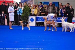Выбор лучшей собаки выставки
