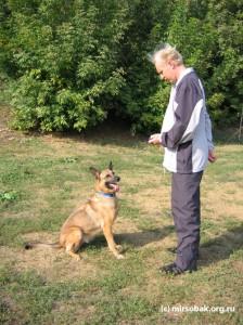 Урок кликер тренинга начало обучение собаки с помощью кликера