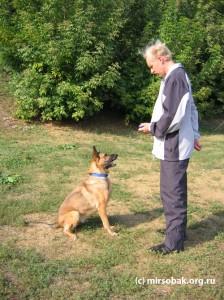 Кликер-дрессировка кликер тренинг собак