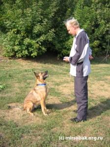 Уроки кликер тренинга дрессировка собак