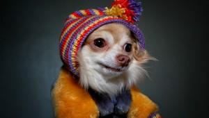 Теплый жилет для собаки своими руками вяжем жилет