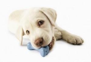 Страх салюта петард у собак