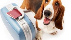 Путешествия с собакой