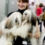 выставка собак Евразия 2013 лхаса апсо