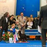 Выставка собак Евразия 2013