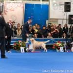 Выставка собак Евразия 2013 бест лабрадор ретривер Etu Asti Mondoro