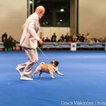 Выставка собак Евразия 2013 бест мопс