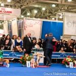 Выставка собак Евразия 2013 бест