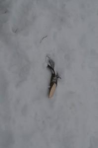 Лопата, которую Кочеров сломал об щенка