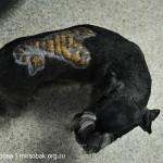 креативный груминг цверга, тату на шерсти, объемное выстригание на шерсти